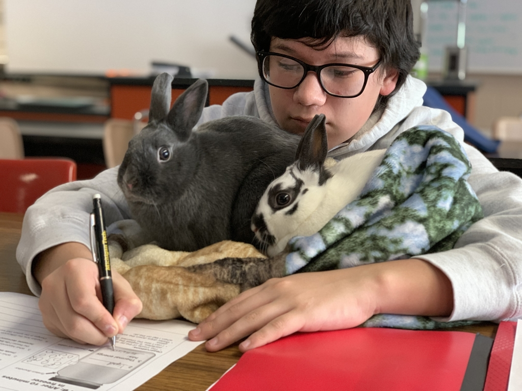 Taking a science test with the classroom bunnies.